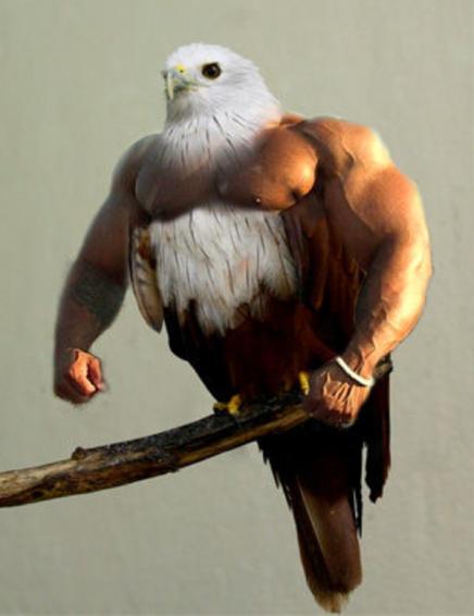 BirdsArms1
