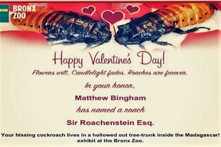 valentine-s-cockroach-photo-u1
