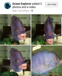 #DoubleFML fish