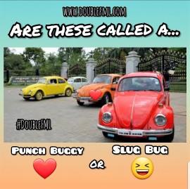 DoubleFML beetle